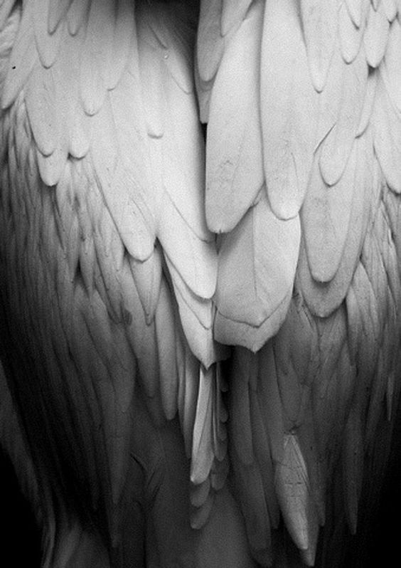 nmny_wings